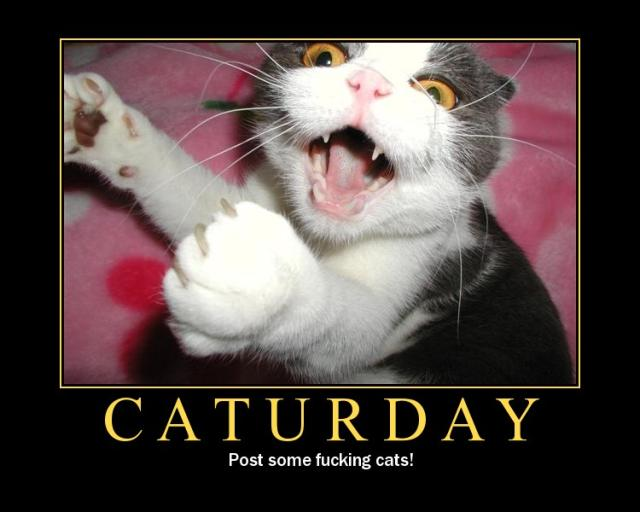 caturday meme post some fucking cats motivator demotivator lol cat macro