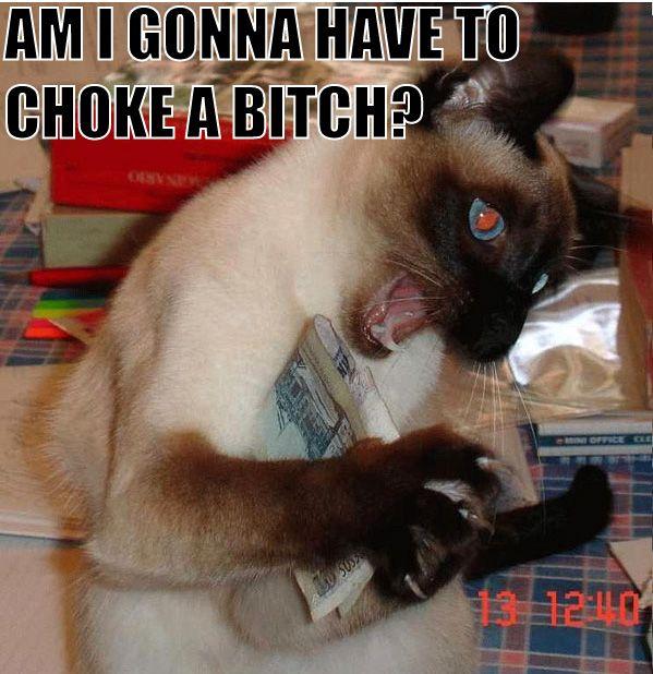 Am I Gonna Have To Choke A Bitch Cat Macros