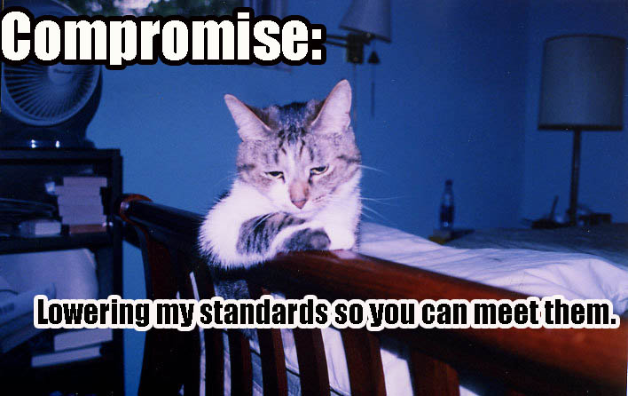 compromise lowering my standards lol cat macro