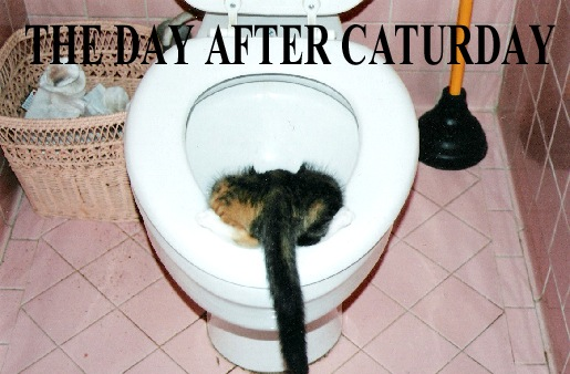 day after caturday hangover sick vomit bathroom toilet lol cat macro