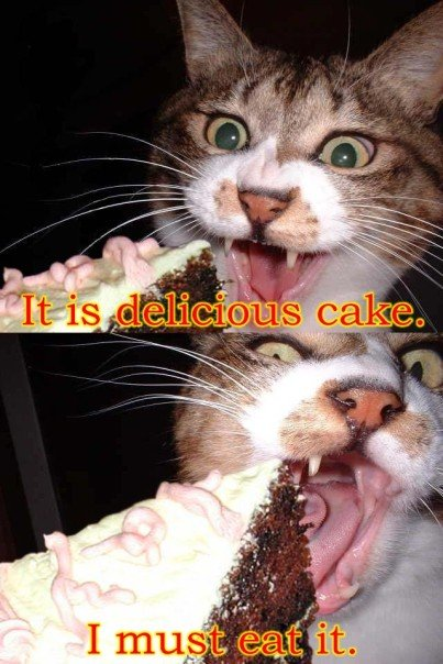 delicious cake must eat it meme nom lol cat macro