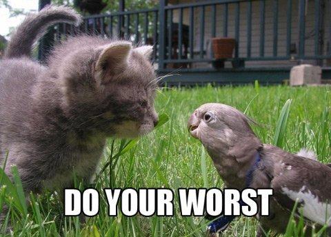 kitten parrot bird argument fight lol cat macro