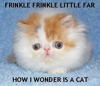 twinkle little star frinkle meme far wonder is a cat star lol cat macro