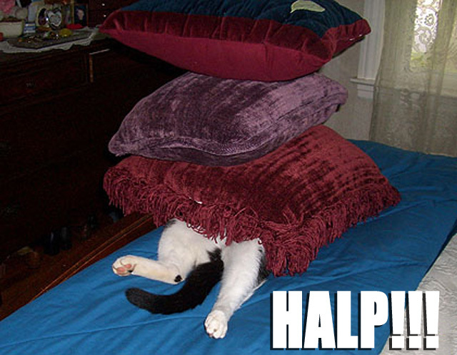 cat squashed under pillows cushions help me lol cat macro