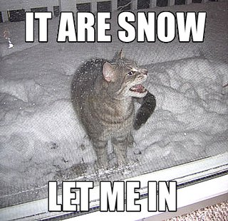 it are snow its snowing let me in winter lol cat macro