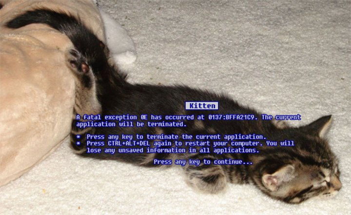 windows kitten fatal exception error message computer pc lol cat macro