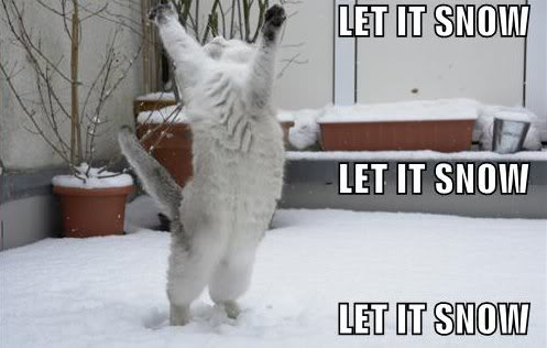 let it snow song sing dancing happy winter lol cat macro