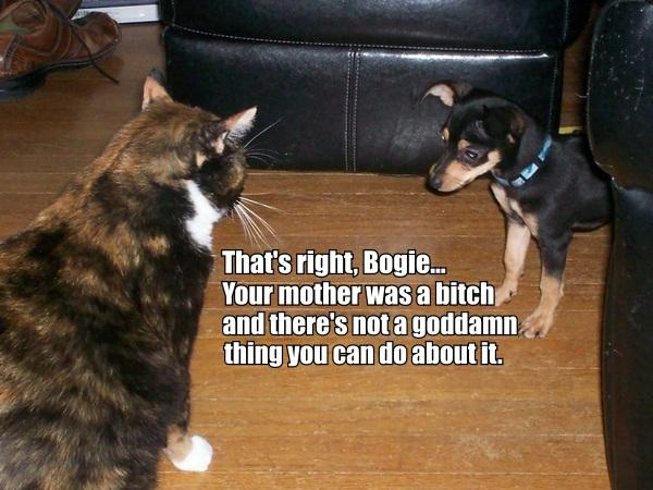 your mother was a bitch dog puppy lol cat macro