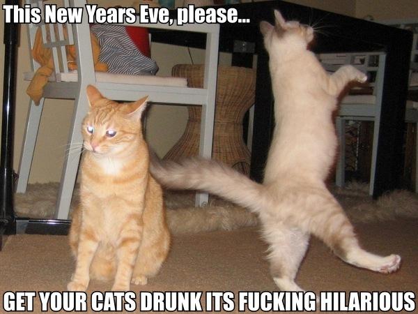 new years eve drunk cats dancing booze alcohol lol cat macro