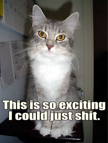 sarcastic so exciting i could shit poop unimpressed bored lol cat macro