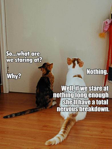cats staring at wall nothing mystery lol cat macro