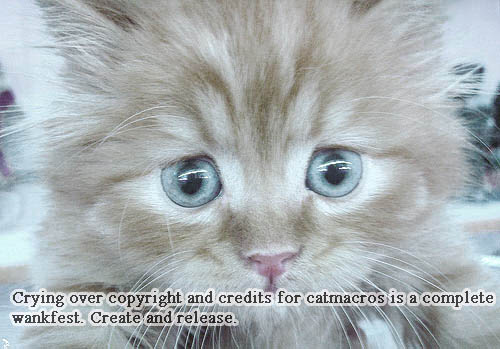 whining about copyright lol cat macro
