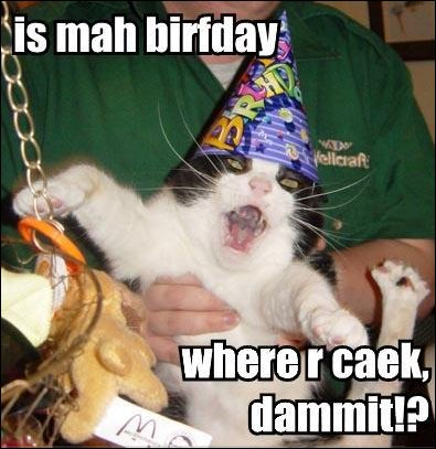 birthday cake where are caek party hat lol cat macro
