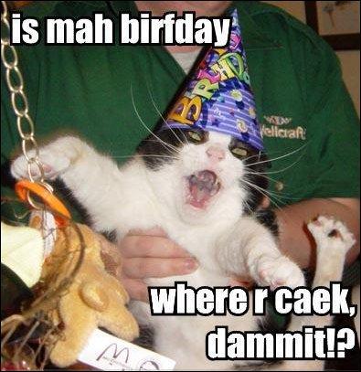 birthday cake where are caek party hat lol cat macro