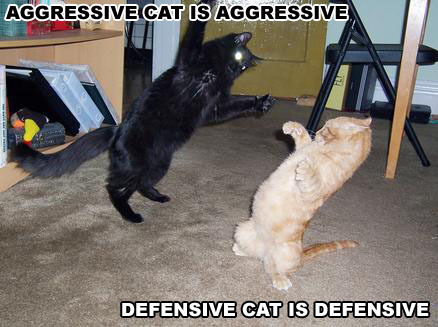 cat fight aggressive defensive lol cat macro