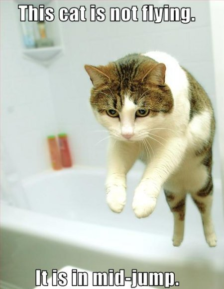 not flying bath tub jumping average cats lol cat macro