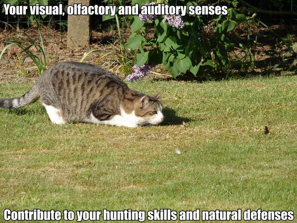 star trek data poem visual olfactory auditory lol cat macro
