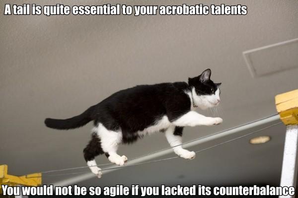 star trek data poem tail acrobatic talents counterbalance lol cat macro