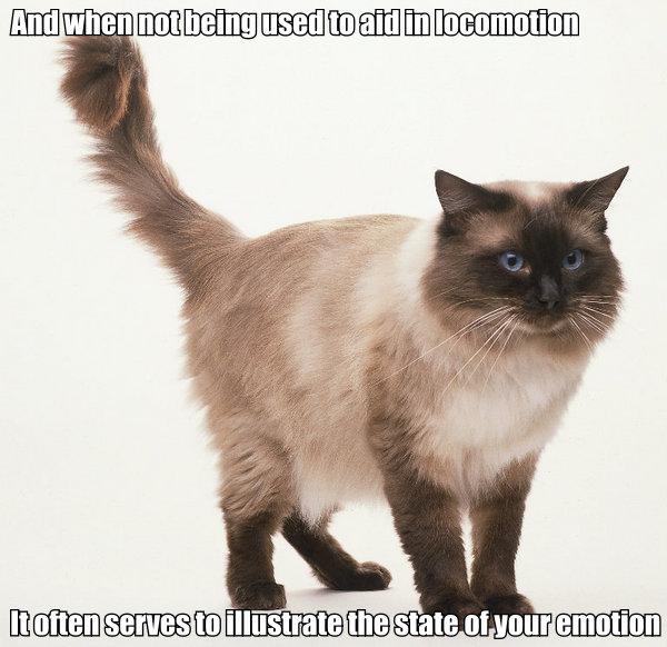 star trek data poem tail locomotion emotion lol cat macro