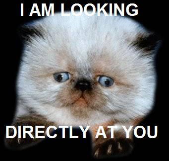i see what you did there squint eyes looking in wrong direction kitten lol cat macro