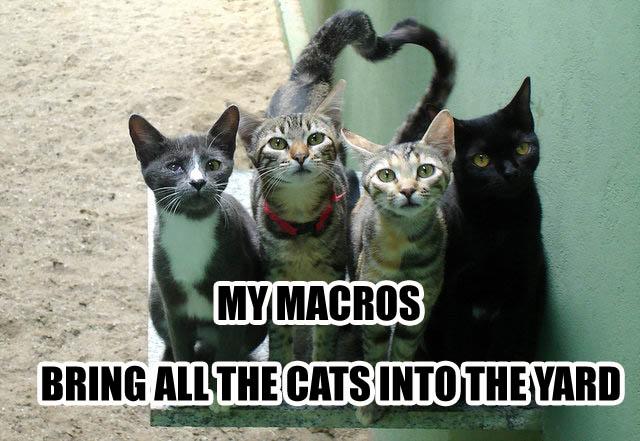 milkshake brings all the boys to the yard kelis lol cat macro