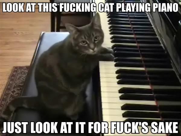look at cat playing piano keyboard music meme lol cat macro