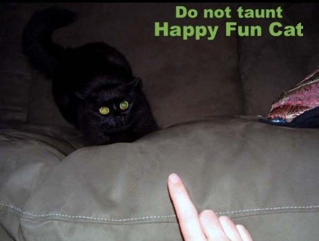 taunt tease pointy finger angry happy fun ball lol cat macro