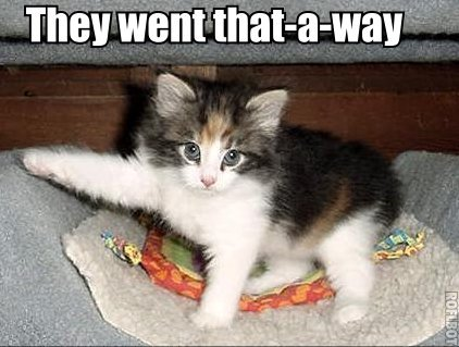 that-a-way pointing paw kitten lol cat macro