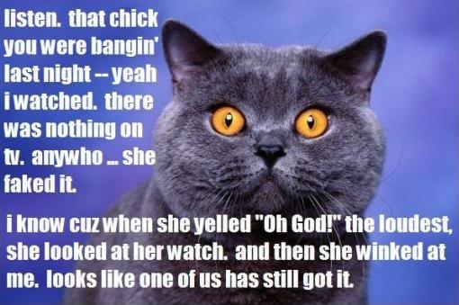 girl chick banging tv fake orgasm sexual magnetism charisma lol cat macro