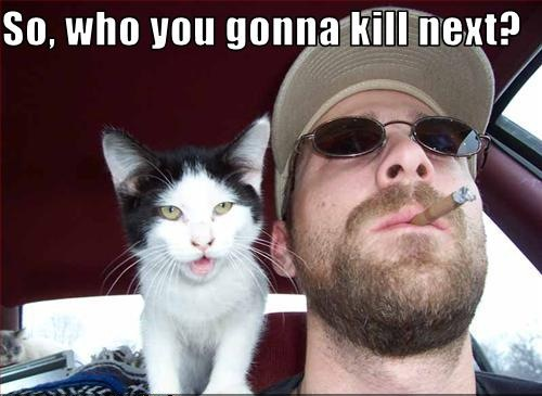 guy cigar shades car driving kill crime lol cat macro