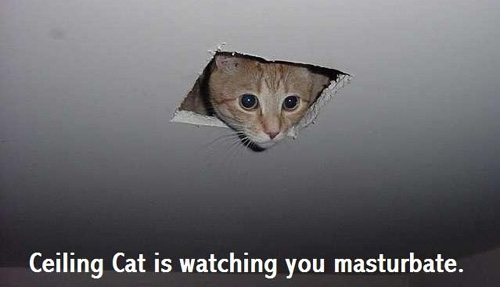 ceiling cat ancient meme masturbation fap lol cat macro