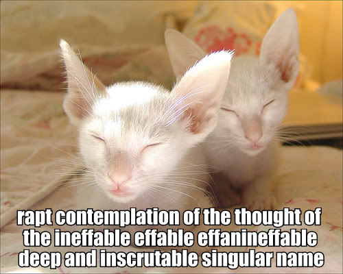 rapt contemplation ineffable naming of cats ts eliot lol cat macro