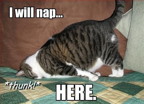 cat suddenly overcome by sleep naps blanket lol cat macro