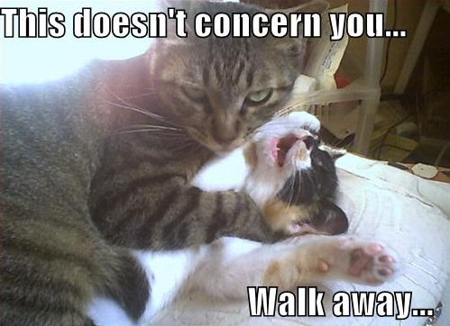 cat fight aggressive fuck off walk away leave me along lol cat macro