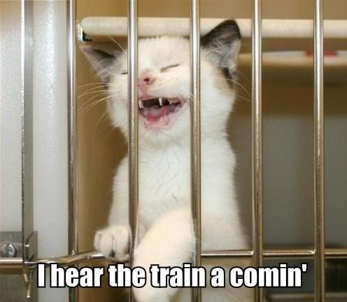 johnny cash kitten in prison crying folsom blues lol cat macro