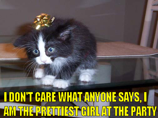 pretty girl party kitten tinsel bow pathetic lol cat macro