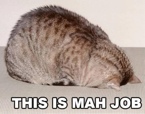 facepalm head down floor carpet work lol cat macro