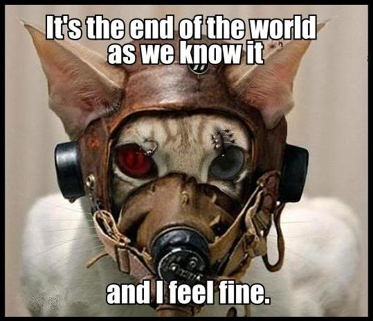 red green eyed cat leather mask lol cat macro
