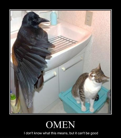 black crow raven basin bathroom sink scared perturbed lol cat macro
