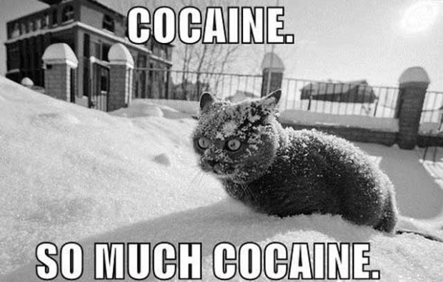 cocaine drugs addict snow winter cat macro