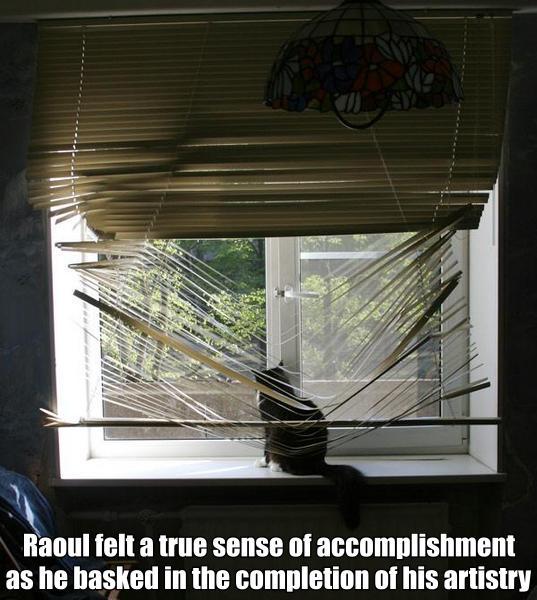 window venetian blind destroyed art cat macro