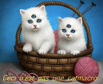 french_cat_macro_magritte_surrealism_pipe_white_kittens_three_eyes