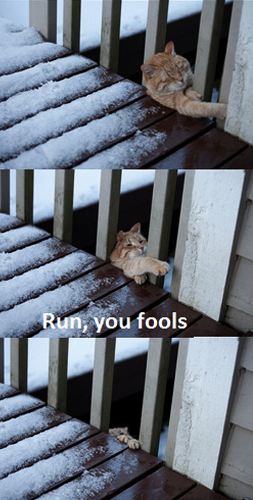 ginger_cat_struggling_trapped_decking_snow_lolcat_macro