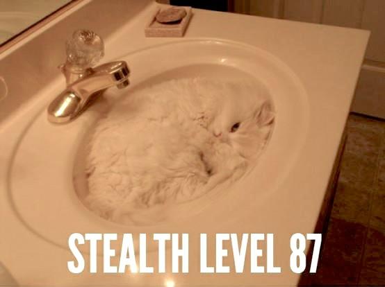 white_cat_in_sink_basin_stealth_level_hiding_macro_lolcat