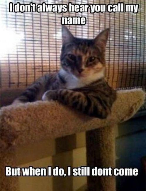 dont_always_when_meme_name_lol_cat_macro