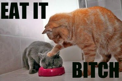 eat_it_bitch_cats_food_bowl_lol_cat_macro