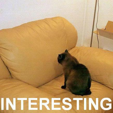 staring_couch_sofa_sette_chair_yellow_interesting_cat_macro