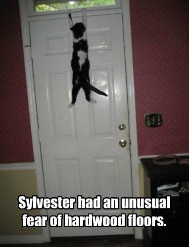 flooring_hardwood_fear_phobic_clinging_door_lol_cat_macro